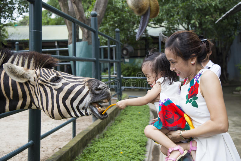 Asiatisk liten flicka som matar en sebra på en zoo royaltyfri foto