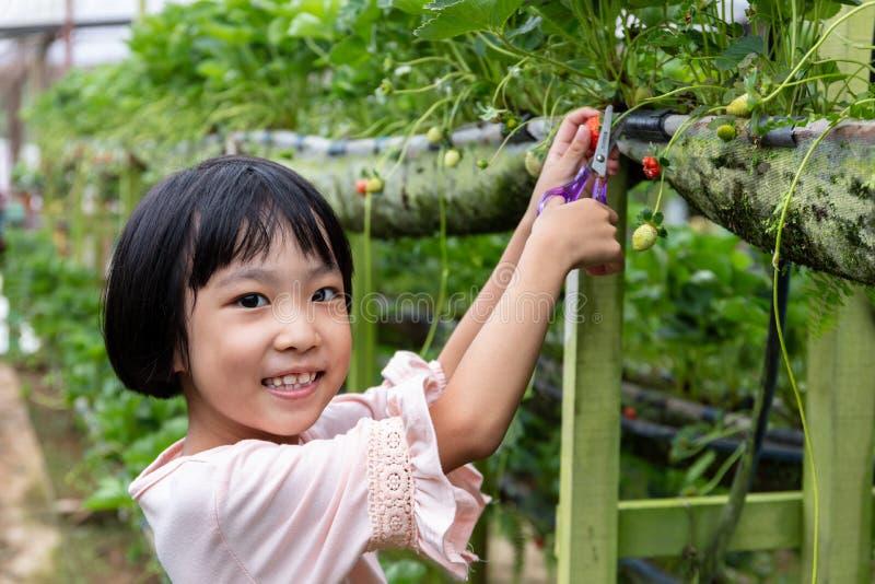 Asiatisk liten kinesisk flicka som väljer den nya jordgubben royaltyfri fotografi