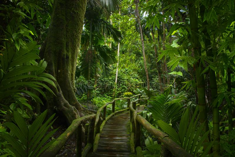 Asiatisk tropisk rainforest arkivfoto