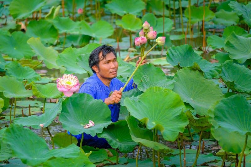 Asiatiska bönder i lantliga Thailand mot efterkrav lotusblommablommor i fälten som ska säljas royaltyfri fotografi