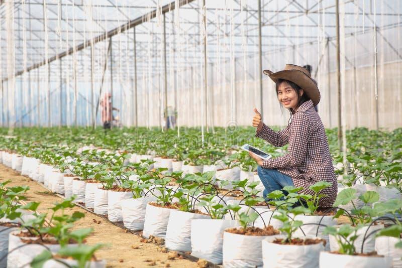 Asiatiska flickabönder som lyckligt ler på melonlantgården, jordbruks- begrepp arkivfoto