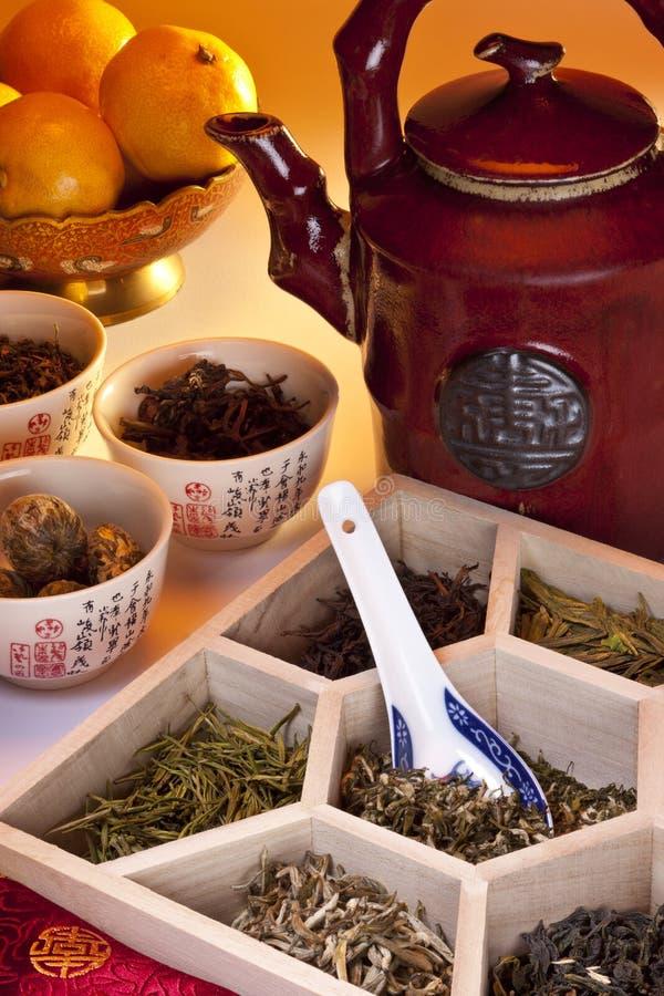Asiatiska växt- Teas arkivfoto