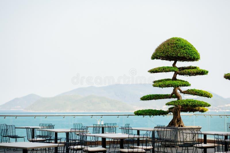Asiatiskt exotiskt kafé utomhus arkivfoton
