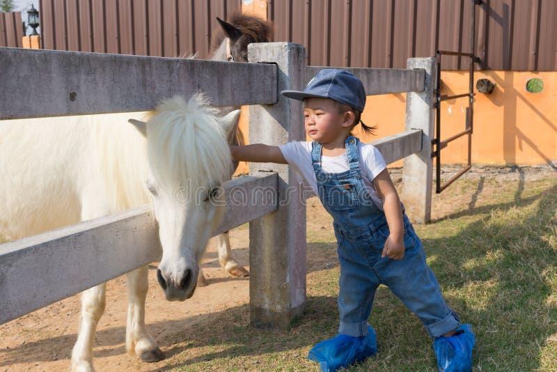 Asiatiskt gulligt behandla som ett barn flickahandhandlag för att ställa i skuggan hästen arkivbild