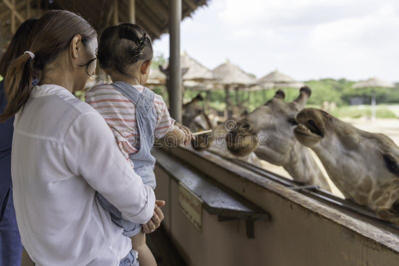 Asiatiskt gulligt behandla som ett barn flickan som matar p? din hand f?r stor giraff i bakgrund f?r djur lantg?rd royaltyfria bilder