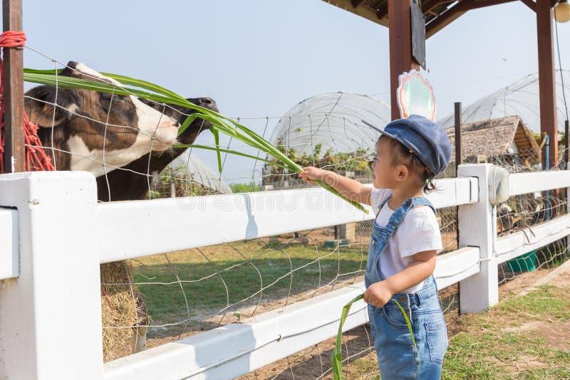 Asiatiskt gulligt nyfött behandla som ett barn matningsgräs för koiin lantgården arkivbilder