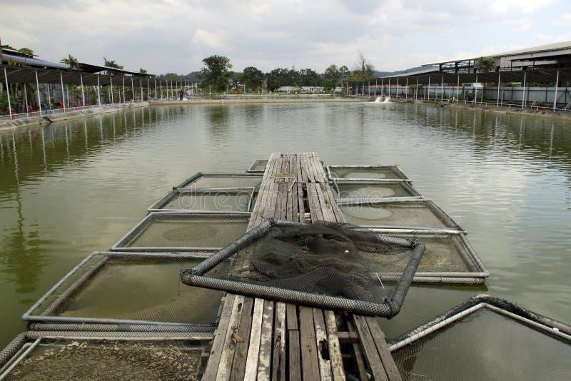 Asien-Aquakulturfischereiteich stockbild