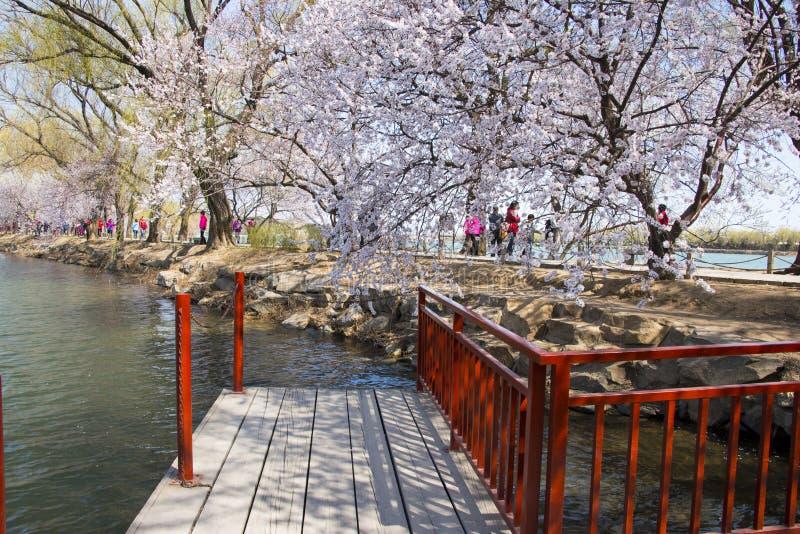 Asien Kina, Peking, sommarslotten, västra för ŒSpring för ¼ för Dykeï ¼ŒSpring sceneryï ¼ Œ flowersï royaltyfri bild