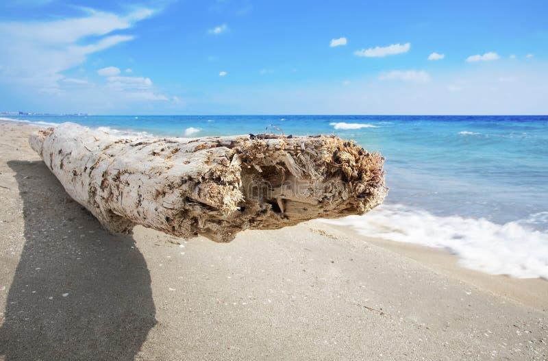 Asiento de la madera de deriva en la playa blanca de la arena imágenes de archivo libres de regalías