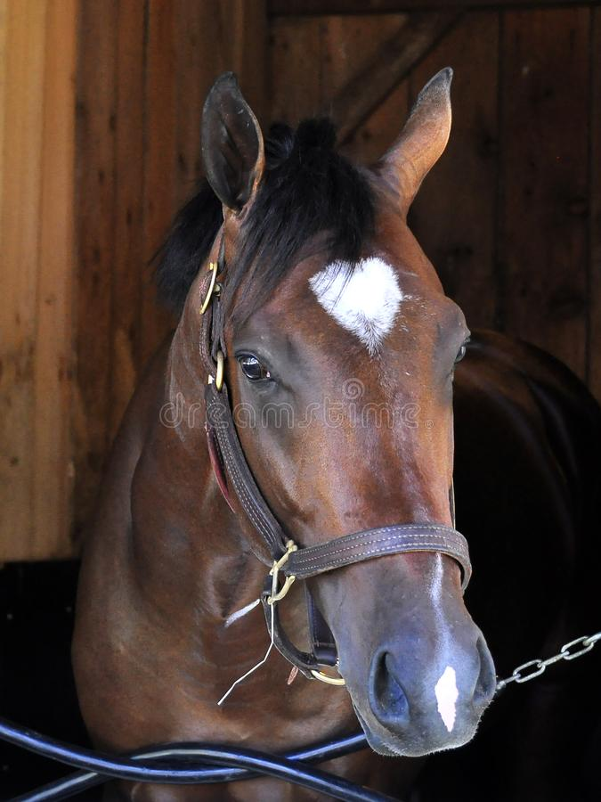 Asile Saratoga de cheval images stock