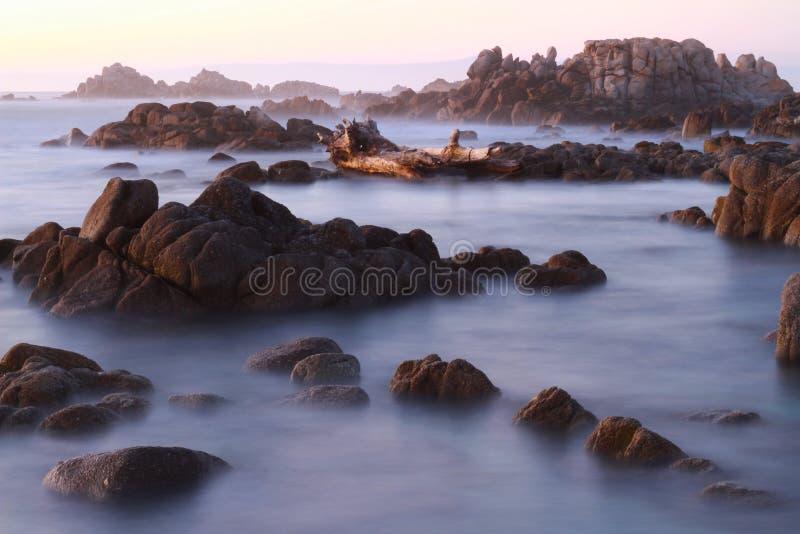 Asilomar Marine Reserve, Stillahavs- dunge, Kalifornien, USA fotografering för bildbyråer