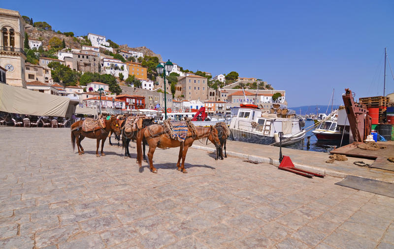 Asini al golfo Grecia di Saronic dell'isola della hydra fotografie stock libere da diritti