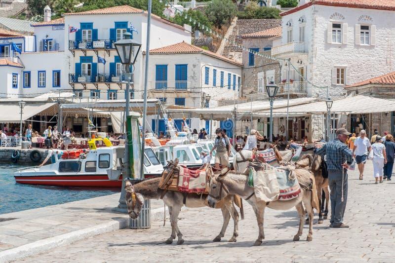 Asini alla hydra greca dell'isola immagine stock libera da diritti