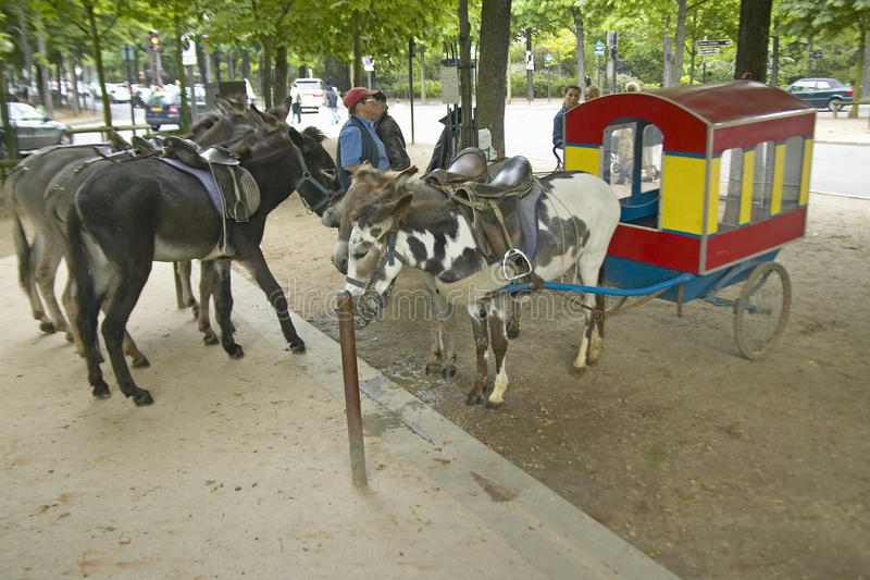 Asini che aspettano per essere guidato al giro dell'asino in parco, Parigi, Francia fotografie stock