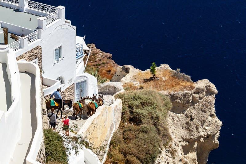 Asini che discendono le scale a OIA Santorini Grecia immagini stock