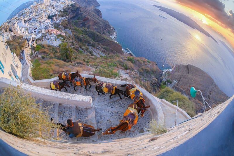 Asini contro il tramonto variopinto sull'isola di Santorini in Grecia fotografie stock libere da diritti