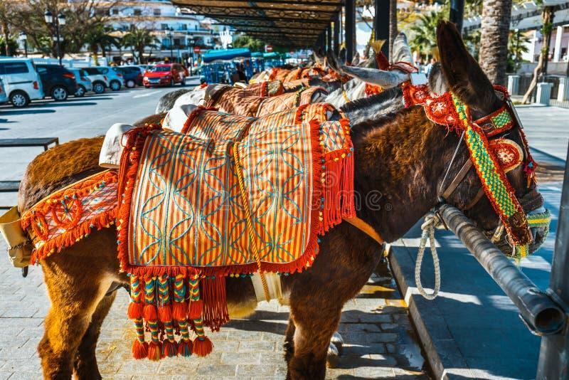 Asini decorati variopinti famosi come passeggeri aspettanti del Burro-taxi a Mijas, un'attrazione turistica importante andalusia immagini stock