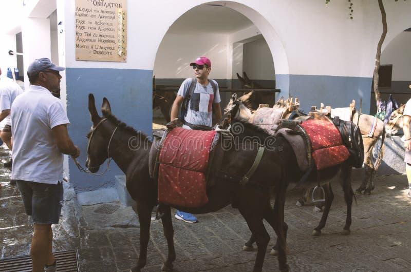 Asini di parcheggio in Lindos per visitare l'acropoli fotografia stock libera da diritti