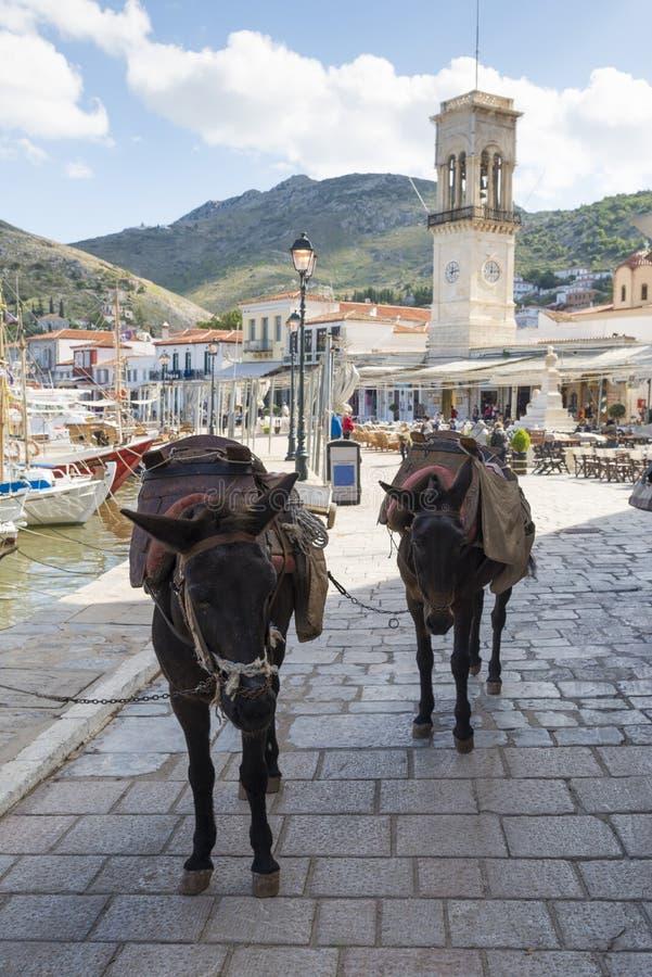 Asini in hydra, Grecia fotografie stock libere da diritti