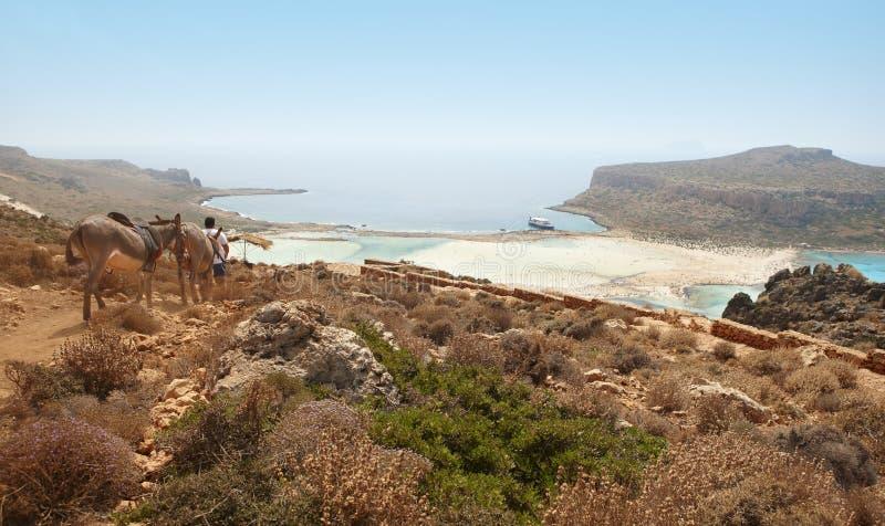 Asini nella montagna Spiaggia di Balos crete immagini stock libere da diritti
