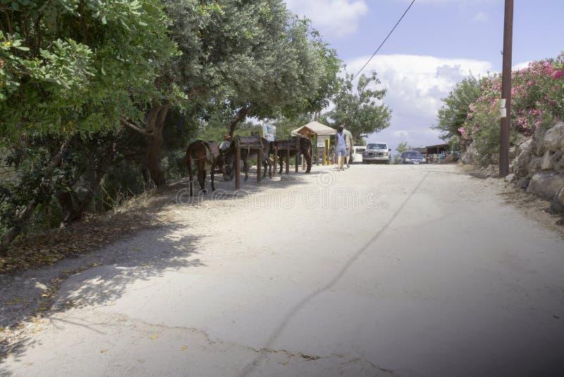 Asini per un giro nel Cipro fotografia stock