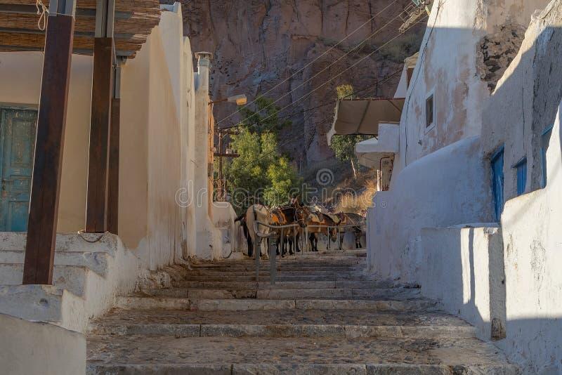 Asini sui punti di Fira, Santorini, Grecia fotografie stock