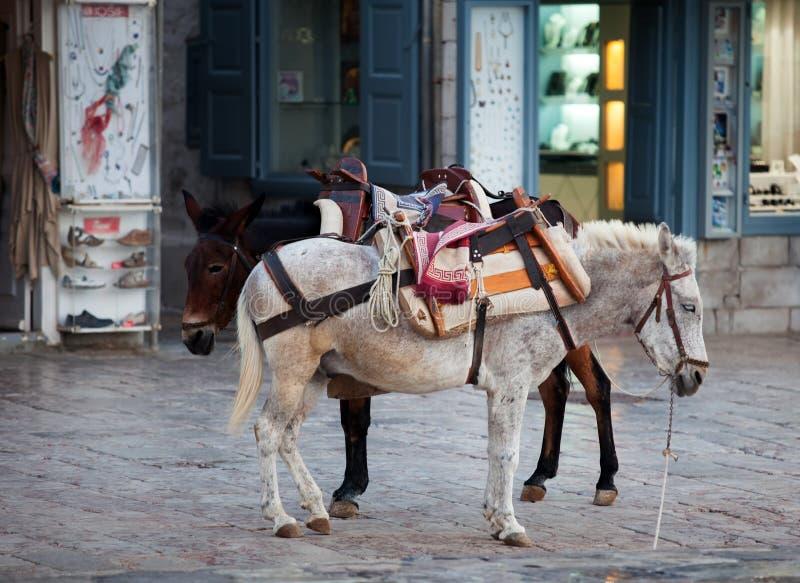 Asini sulla hydra in Grecia immagine stock