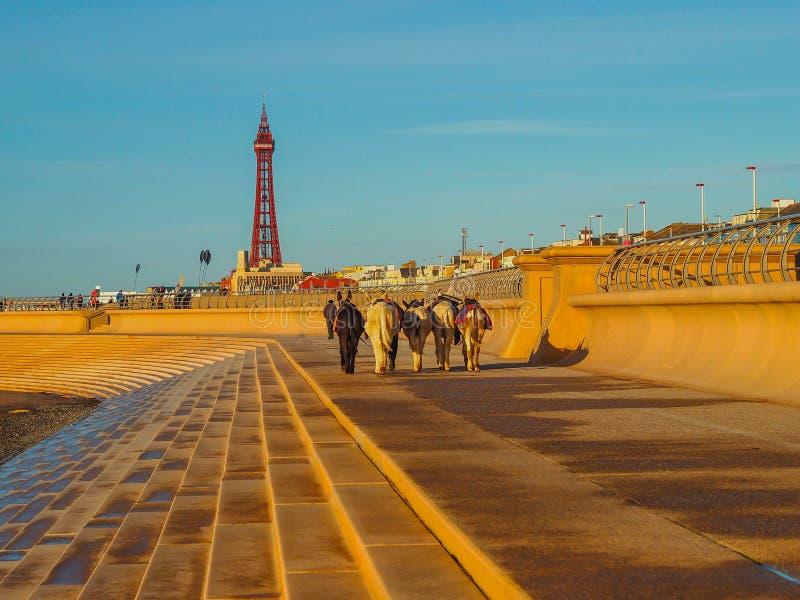 Asini sulla passeggiata di Blackpool fotografie stock