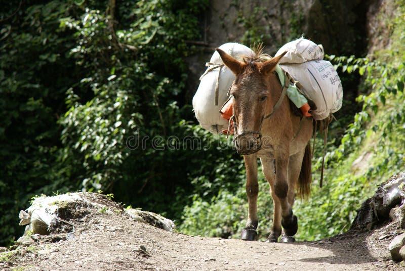 Asino caricato Nepal fotografie stock libere da diritti