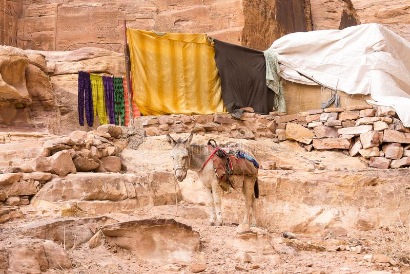 Asino nel deserto immagini stock