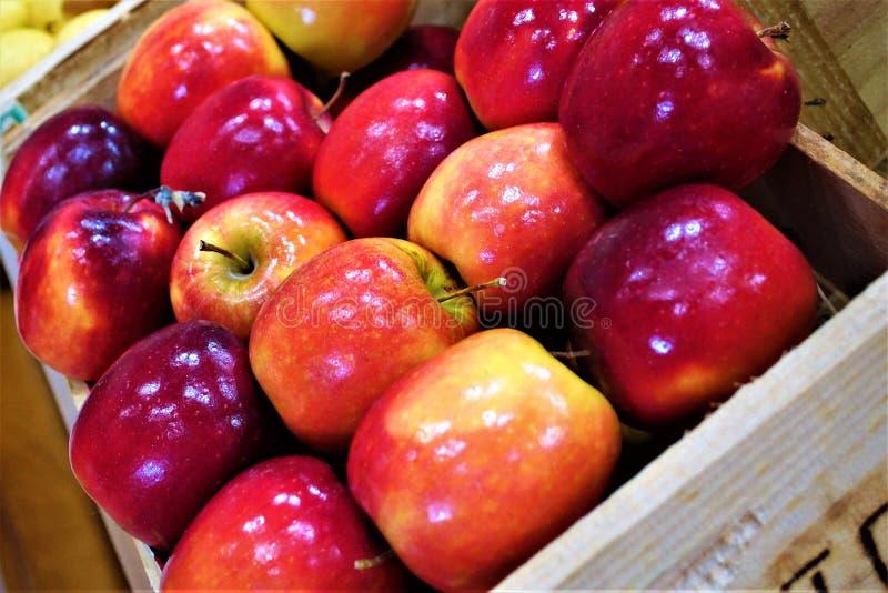 Ask av äpplen arkivfoton