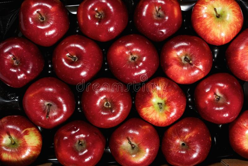 Ask av nya äpplen royaltyfria bilder
