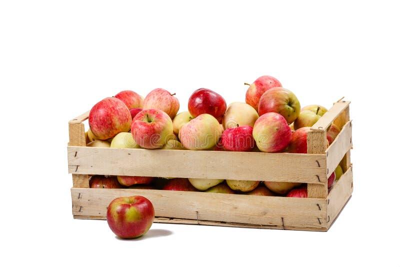 Ask med äpplen royaltyfria bilder