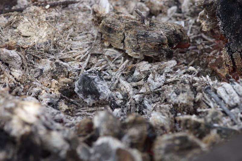 Aska i spisen efter grillfesten arkivbilder