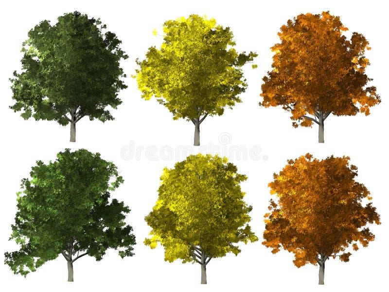 Askaträd som isoleras på vit royaltyfri illustrationer