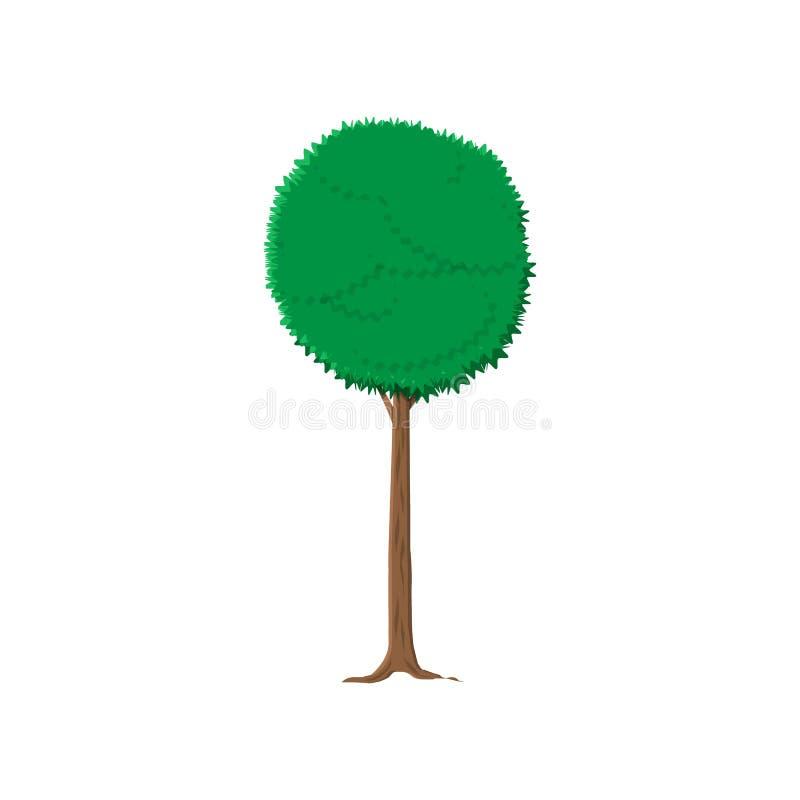 Askaträd som isoleras på vit stock illustrationer