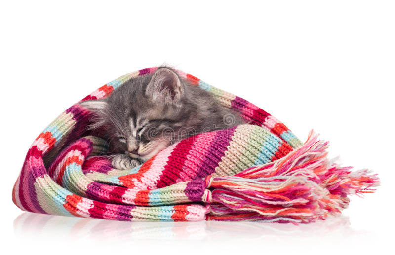 Asleep kitten. Asleep little kitten in the knitted scarf isolated on white background stock images