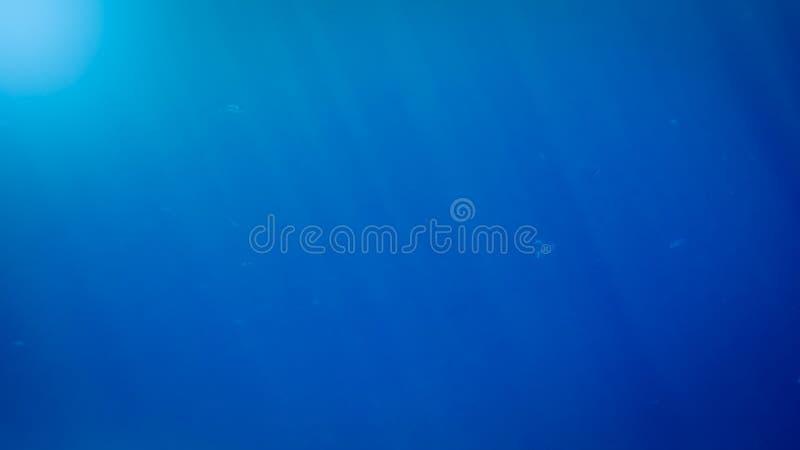 Asombroso bajo imagen del agua de pescados que nadan y de rayos brillantes del sol en la superficie del agua fotos de archivo