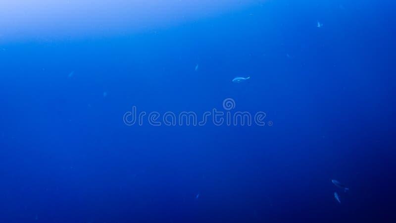 Asombroso bajo imagen del agua de pescados que nadan y de rayos brillantes del sol en la superficie del agua foto de archivo