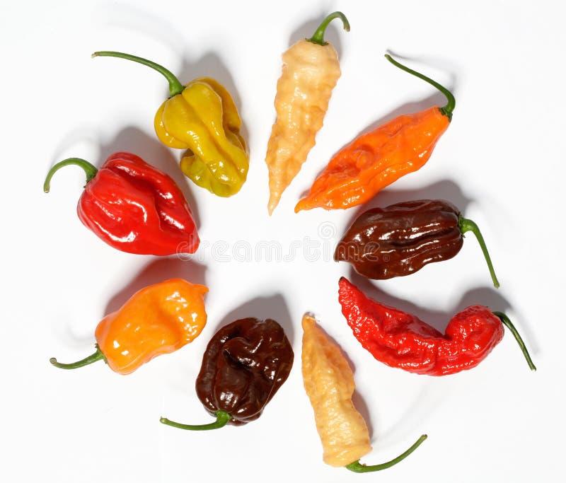 Asortowani świezi organicznie czerwonego chili pieprze, habanero zdjęcia stock