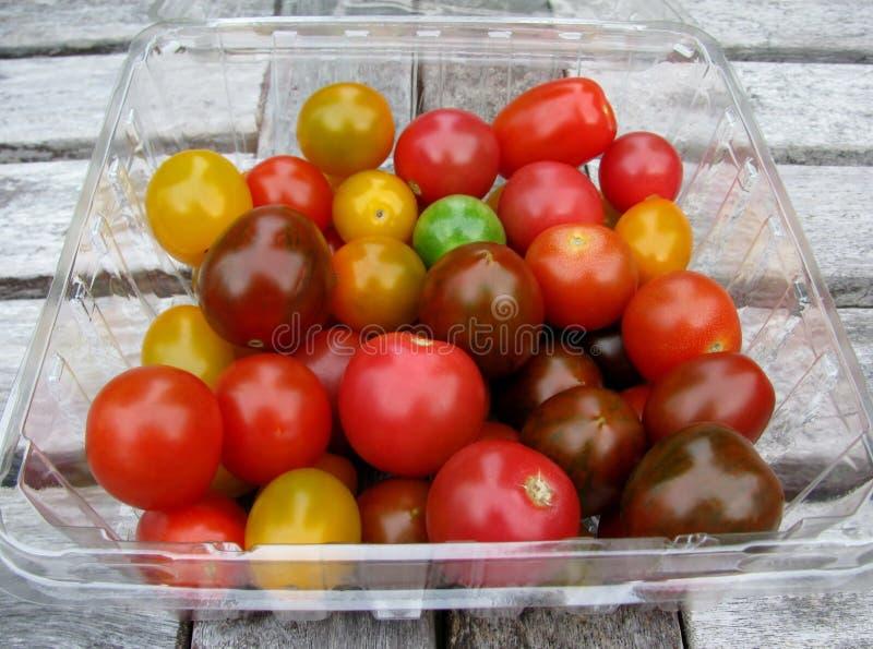 Asortowani świezi organicznie kolorowi pomidory w plastikowym zbiorniku obraz royalty free