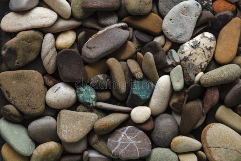 Asortowani kamienie wiele rozmiary znajdują na łuskanie plażach W górę otoczaków inkasowych w pogodnym letnim dniu Udziały gont obraz stock