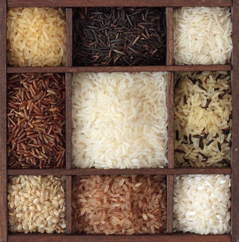asortymentów ryż obrazy stock