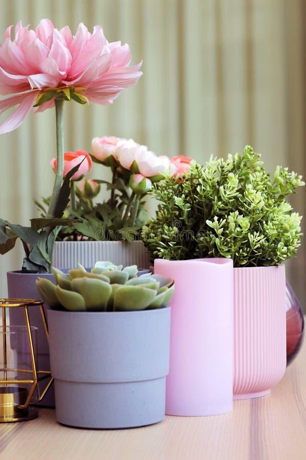 Asortyment kwiat w garnku obraz stock