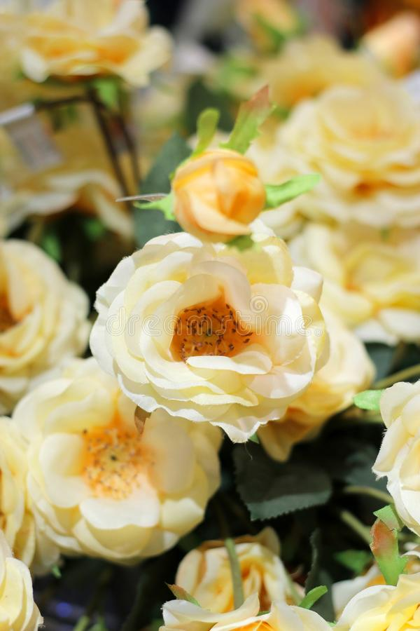 Asortyment kwiat w garnku zdjęcia royalty free