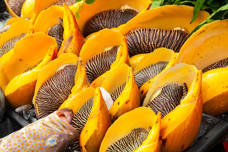 Asortyment Melo melo, owoce morza obraz royalty free