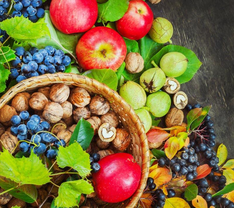Asortyment owoc organicznie jagod jabłczany winogrono damaszkuje orzecha włoskiego rowanberry kraju tła ciemną drewnianą opiekę z obraz stock