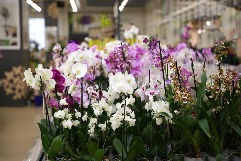 Asortyment piękna orchidea kwitnie przy sklepem zdjęcie royalty free