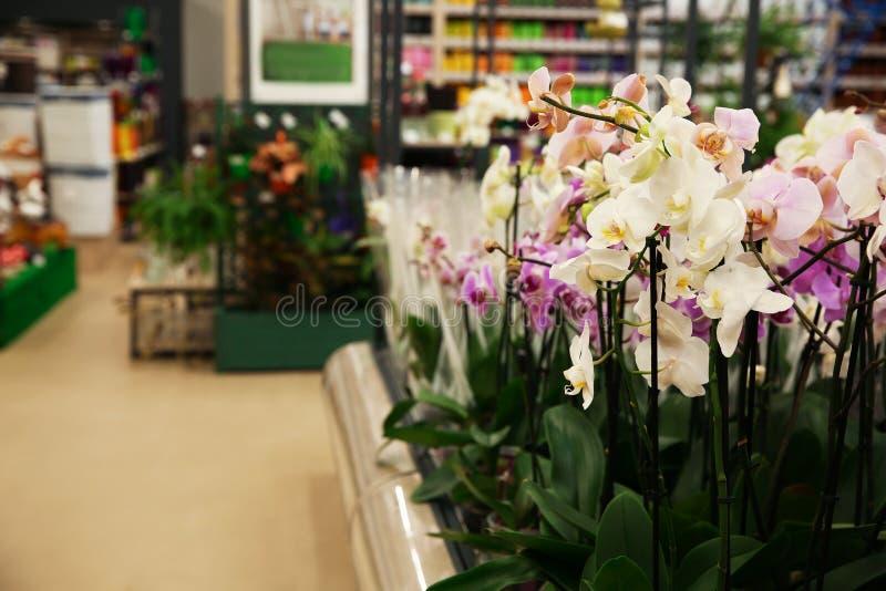 Asortyment piękna orchidea kwitnie przy sklepem obraz stock