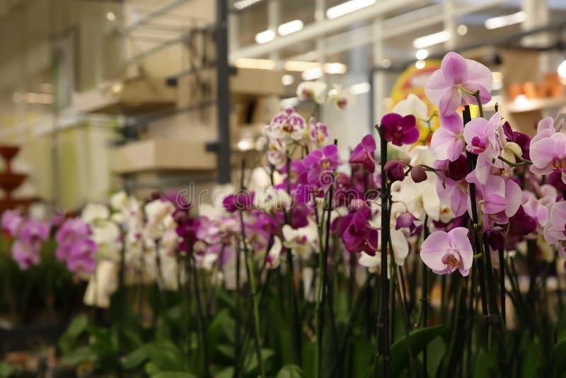 Asortyment piękna orchidea kwitnie przy sklepem zdjęcia royalty free
